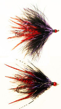 Skagit Leech, Black,Purple,Red - Product Image