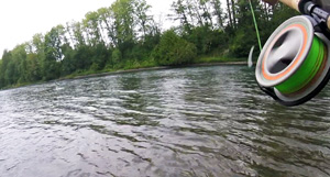 jumping and running Steelhead