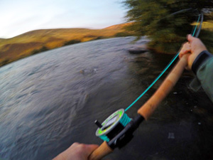 Deschutes River Steelhead Fishing on a fly