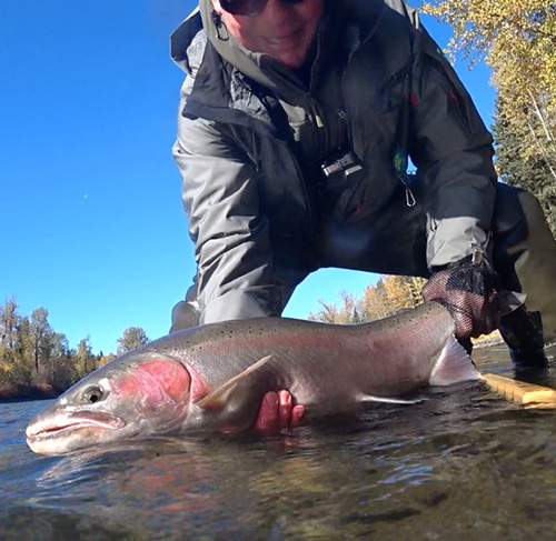 Jeff Layton Bulkley River Steelhead