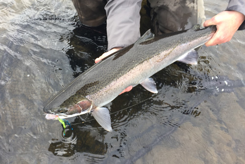 Mike Dixon's Sandy River Alaska Steelhead