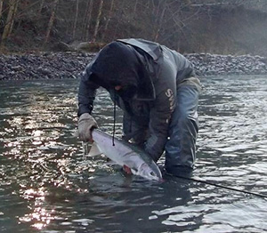 Winter Steelhead 0n a fly