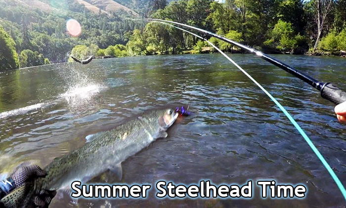 Summer Steelhead, Jeff Layton