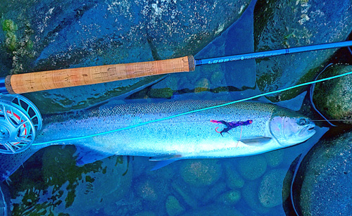 Kristian Rapisarda Steelhead caught on Truder Moal